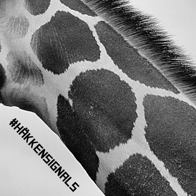 Giraffe_hknsignals